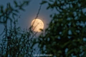 Księżyc w ogrodzie