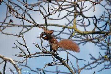 Skok wiewiórki