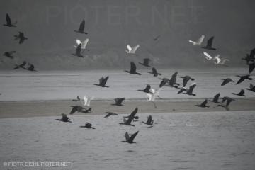 Czaple i kormorany