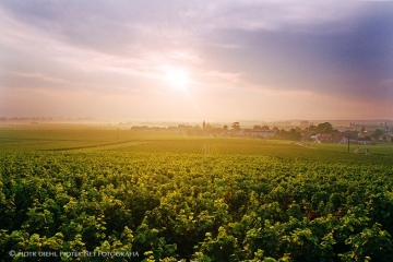 Bourgogne (Vosne)