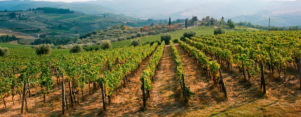 Zdjęcia z Toskanii